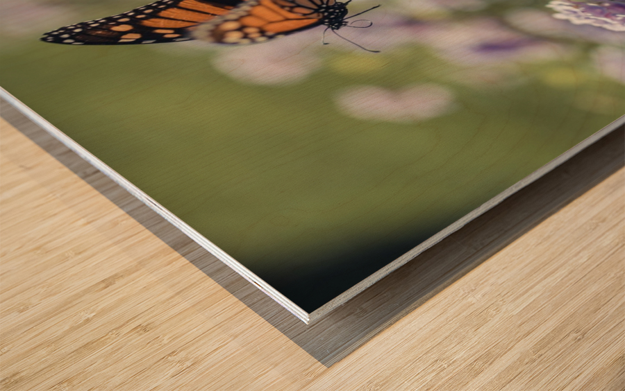 Exploration Wood print