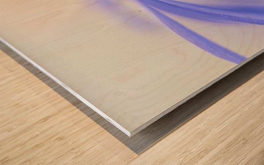Pure ... Wood print