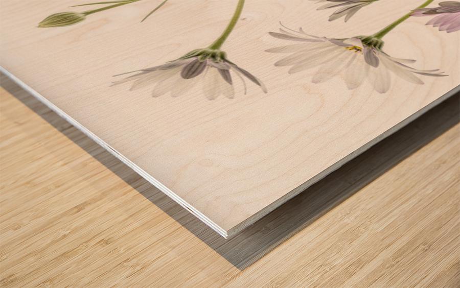 Cape Daisies Wood print