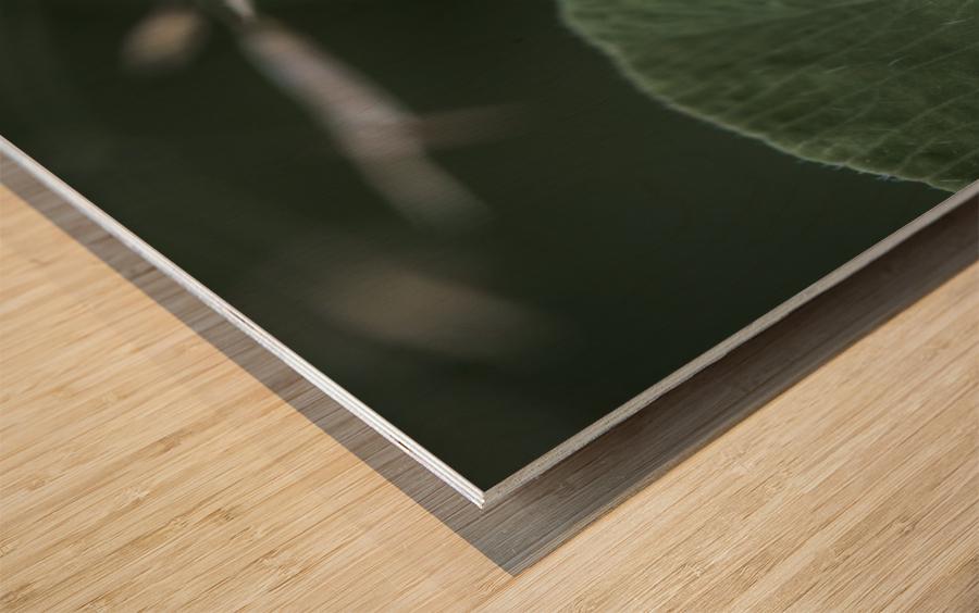 drop Wood print