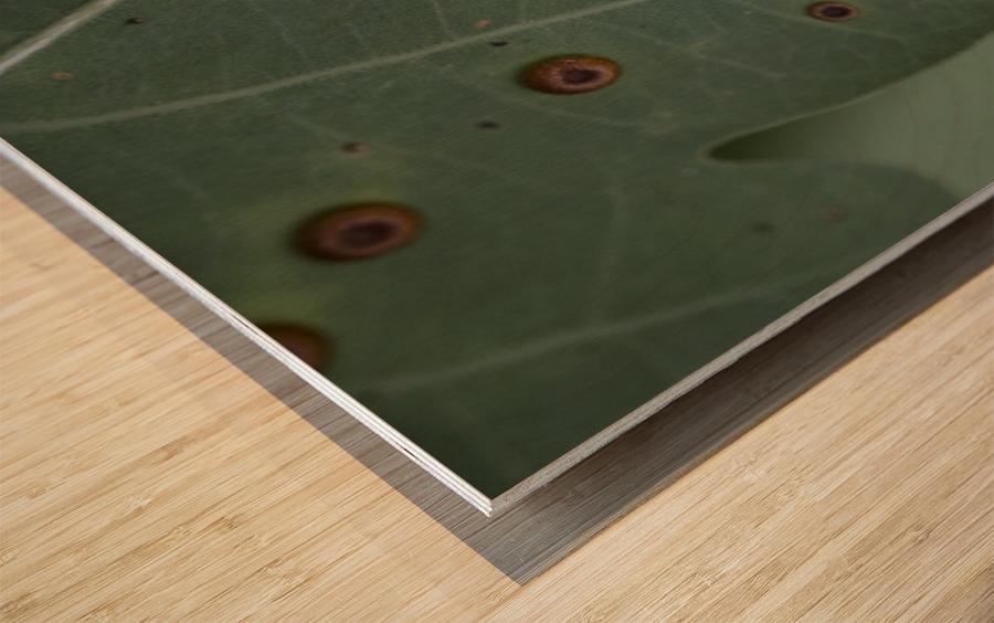 - Wood print