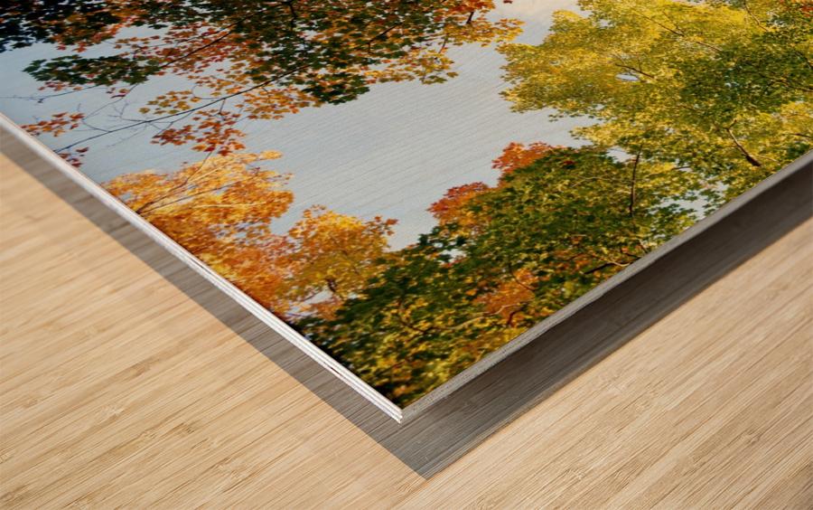 Autumn Trees Low-Angle Wood print