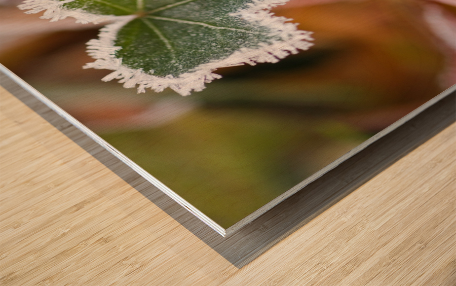Frost On Autumn Leaves Wood print
