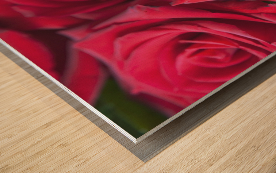 Red Roses; Quebec, Canada Wood print
