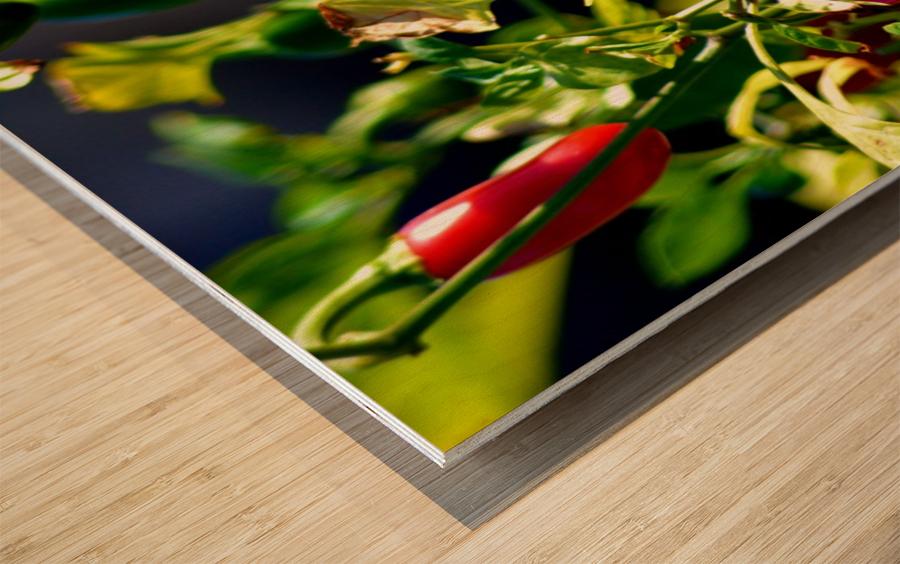 Peppers Wood print