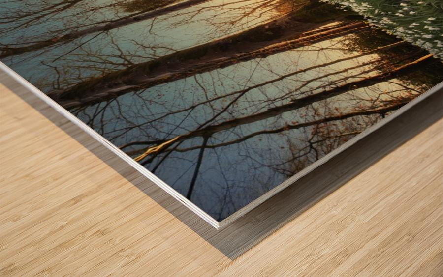 Sunset Forest Laminate Flooring - Laminate Flooring Designs