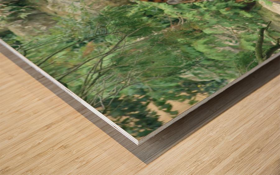 Tigers Wood print