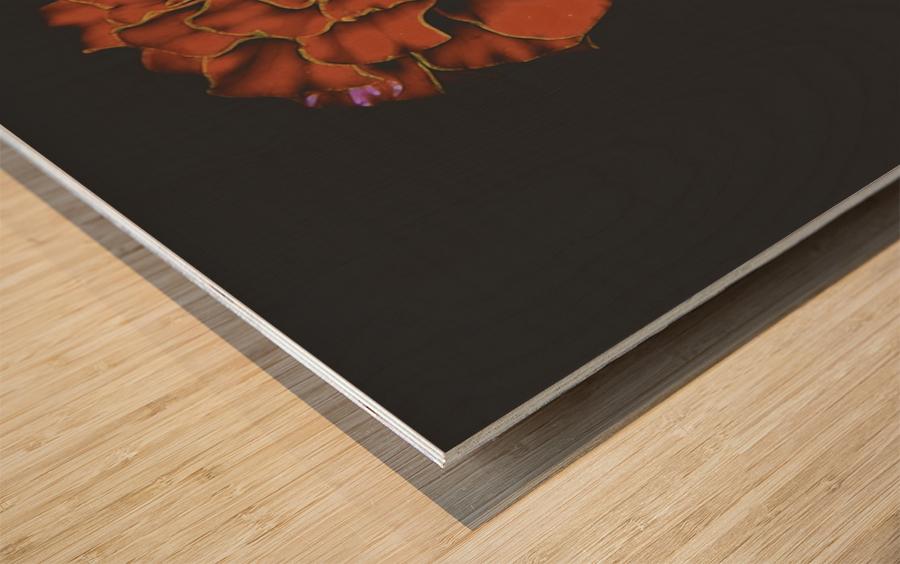 Carnation Bliss Wood print