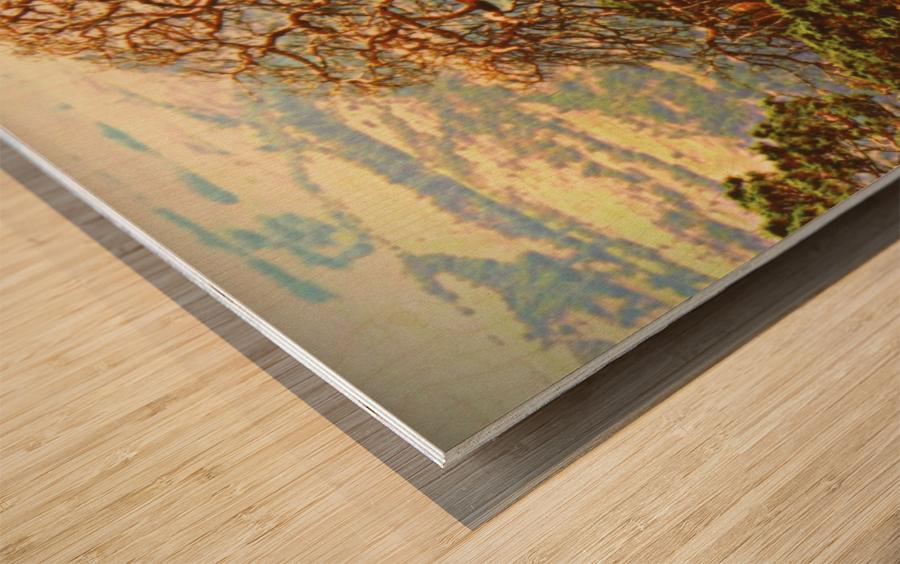 mtscotttreeone Wood print