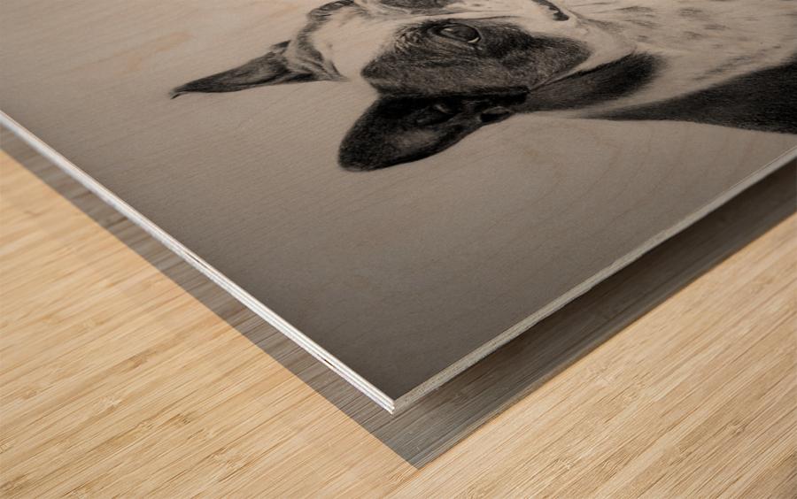 Boston Terriers Wood print