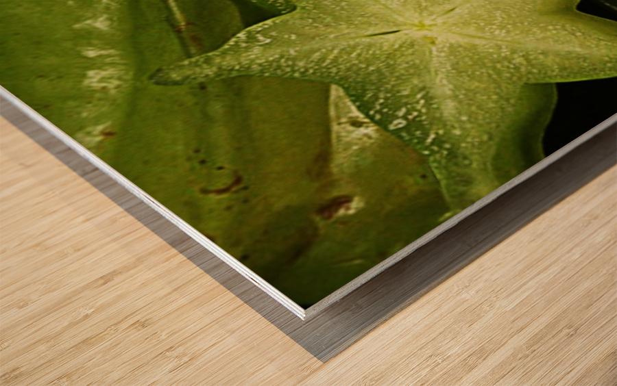 Star Fruit Wood print