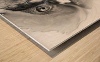 Illustration of a bird's face surrounded by mottled textures and abstract Wood print