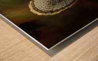 Ruffed Up Wood print
