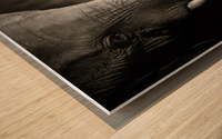 Elephant affection Wood print