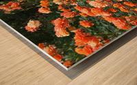 Orange Flowers Growing in Napa Califoria  Wood print