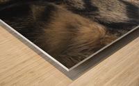 Gizmo - sleepy Wood print