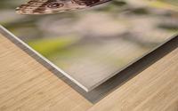 Morpho peleides butterfly Wood print