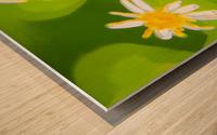 My Daisies - Mes Marguerites Wood print