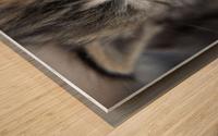 Kitten Face Wood print