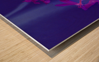 REVERSE TULIPS Wood print