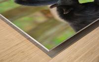 3540-Bear walk Wood print