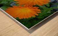 Orange Daisies & Bee Wood print