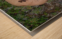 Cookie Mushroom Wood print