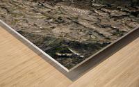 Seals Wood print