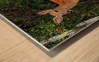 FawnBySaltBlock3 Impression sur bois