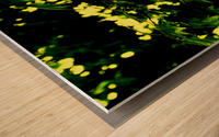F (2) Wood print