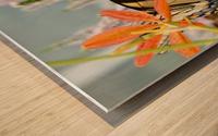 Butterfly On An Orange Flower Photograph Wood print