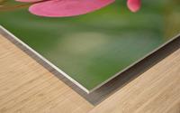 Bleeding Heart Flower Photograph Wood print