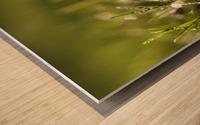 Dew Drops Wood print