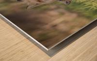 _T8C7860 Wood print
