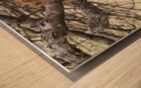 164A0128 Wood print