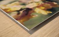Lupinus Luteus Yellow Wood print