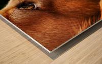 Cocker Spaniel Up Close Wood print