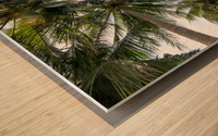 palm trees, sky, palms, background, summer, tropical, nature, holidays, travel, paradise, outdoors, Wood print