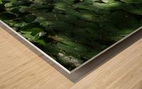 Lotus in the Sunlight Wood print