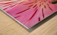 Gentle Pink Wood print