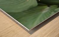 Hosta Bloom 1 Wood print