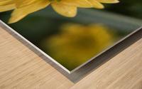 IMG_3924 Wood print