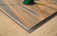 Canard Colvert Wood print