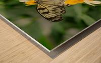 Papillon Rice paper Wood print