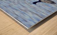 Cormorant Drying  His Wings Wood print