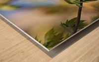 Yellow Warbler In Maple Tree Wood print