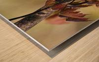 Blackburnian Warbler In Maple Tree Wood print