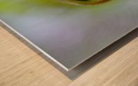 Curled Leaf 03 Wood print