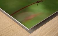 Japanese Maple Seed Wood print