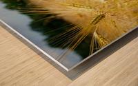 Corn Cob Landscape 06 Wood print